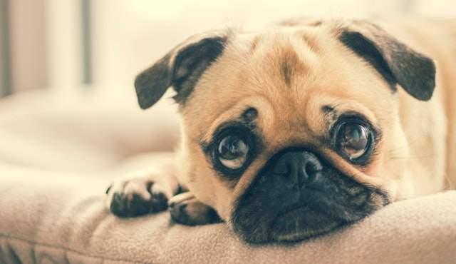 Baking Soda on Carpet for Dog Urine