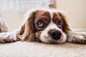 Vinegar on Carpet to Remove Odor